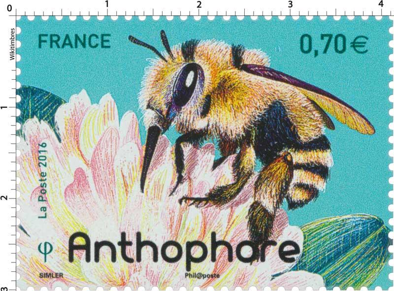 2016 Anthophore