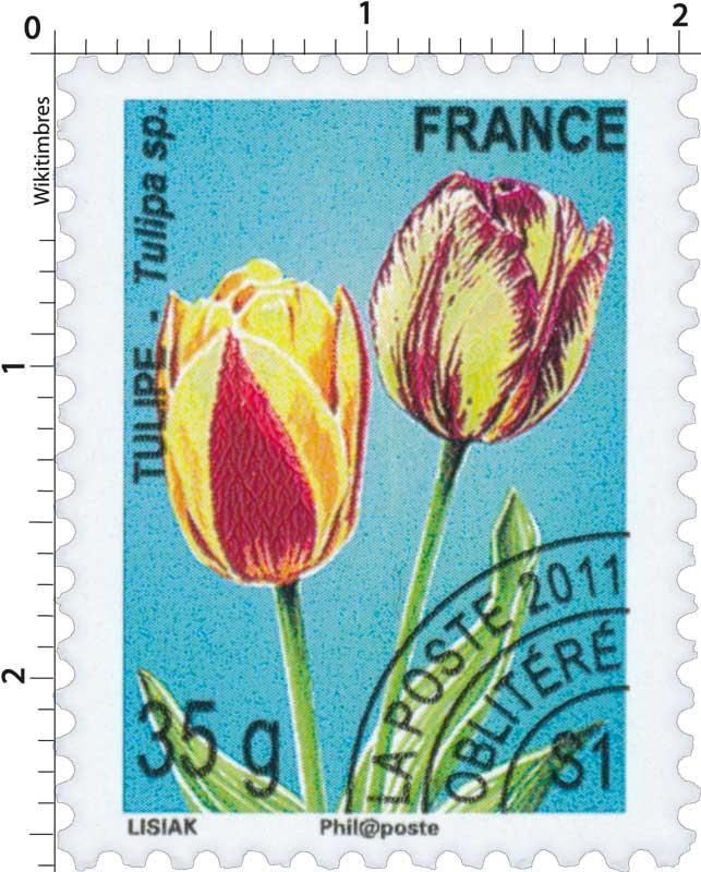 2011 TULIPE - Tulipa sp.